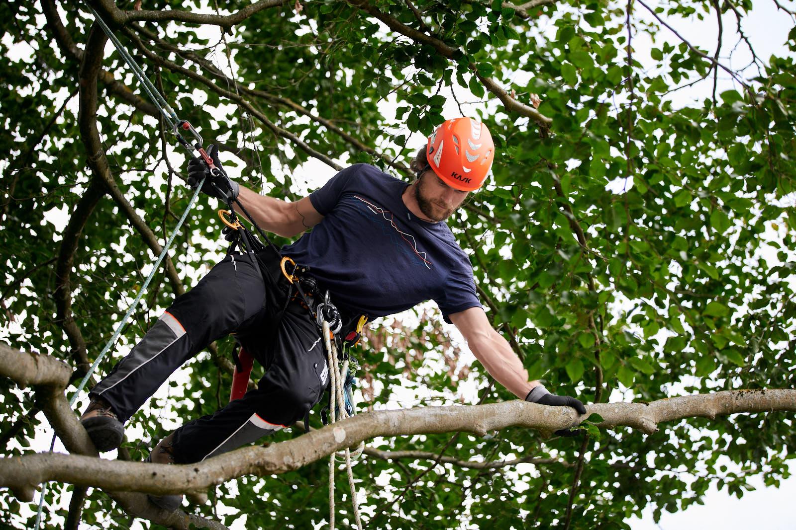 Baumpflege Bayreuth